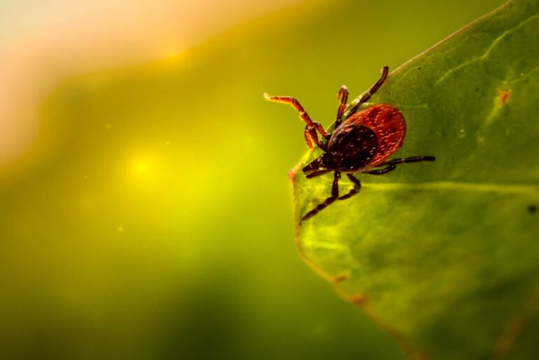 How To Check For Ticks
