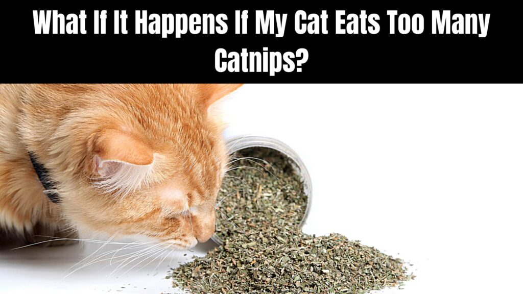 Is Catnip Safe To Give To Cats