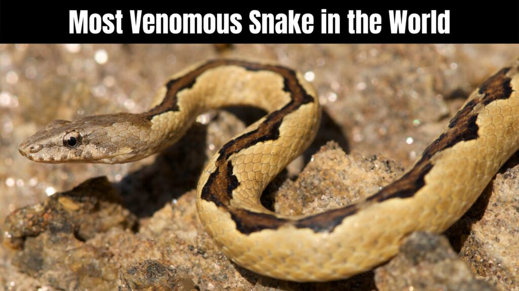 10 Most Venomous Snake in the World