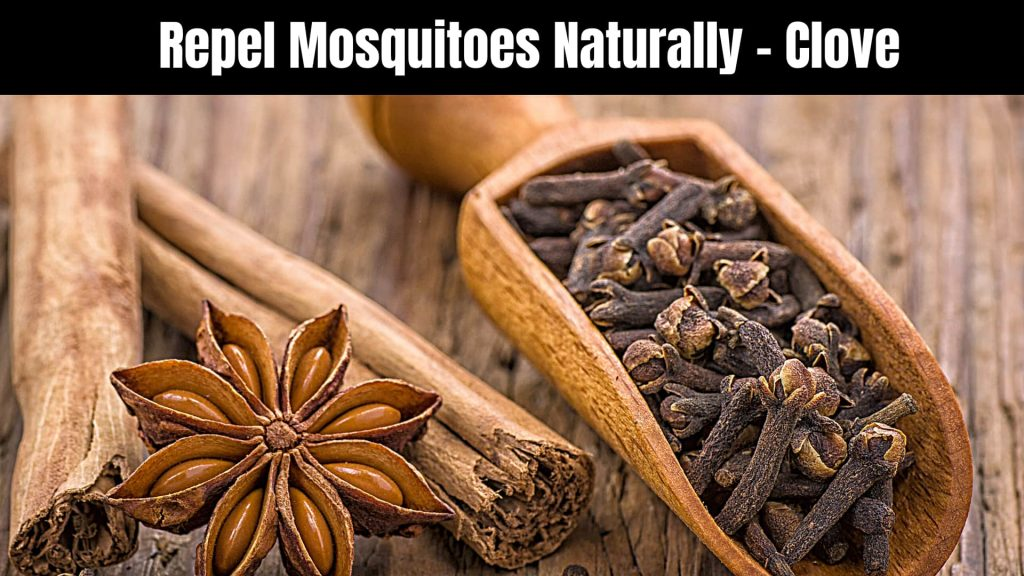 Repel Mosquitoes Naturally